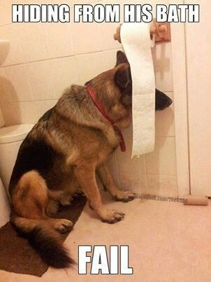 5- This cute dog tried to find a safe place to hide from his bathing time, but he failed. Oops.