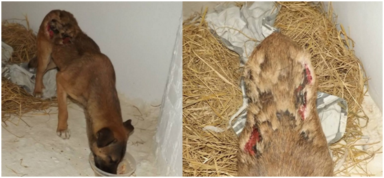 SHOCKING! Photos of Zeus the dog went viral, and the truth is not revealed yet.