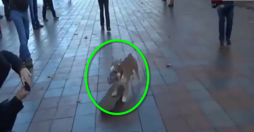 A skateboarding dog surprised protesters in Ukraine! It's totally hilarious.