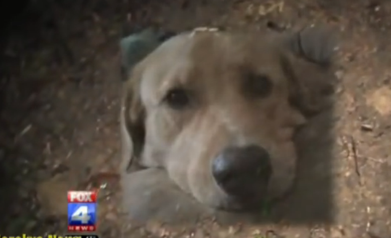 A police officer killed the family's golden retriever dog in front of the family including children.