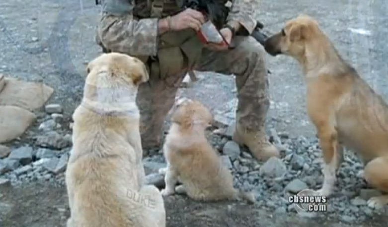 An amazing reunion between a stray dog and a solider! The story is one to be told