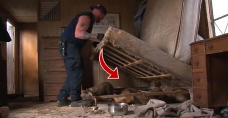 SHOCKING! When they raided this home, the found Hundreds of cats, dogs, and MORE!