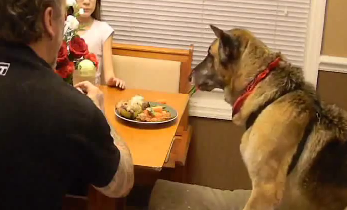 A touching tribute for Hans the German shepherd dog showing his last day with family!