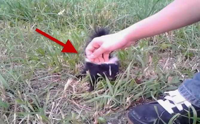 While they were walking, they met that cute baby Skunk, then the fun begun!