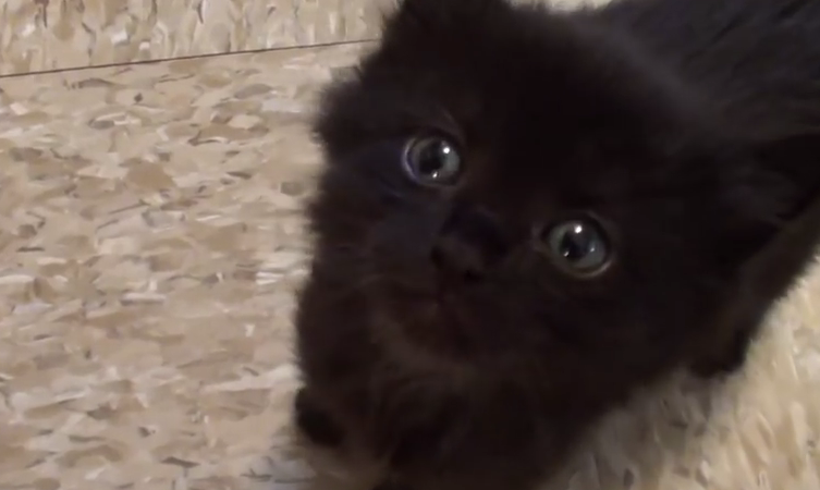 Here are 10 reasons you are lucky to have a black cat!
