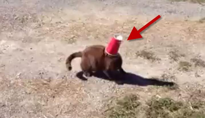 The cat got her head stuck, what the dog did for her was indescribable!
