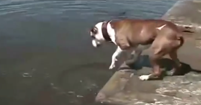 Funny dog trying to reach his goal.