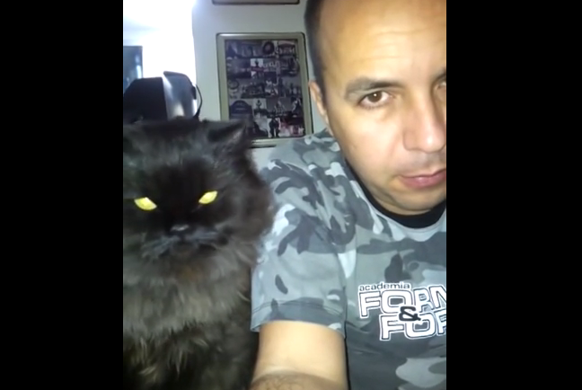 This Persian cat demands petting in a very kind way, she is the cutest ever.