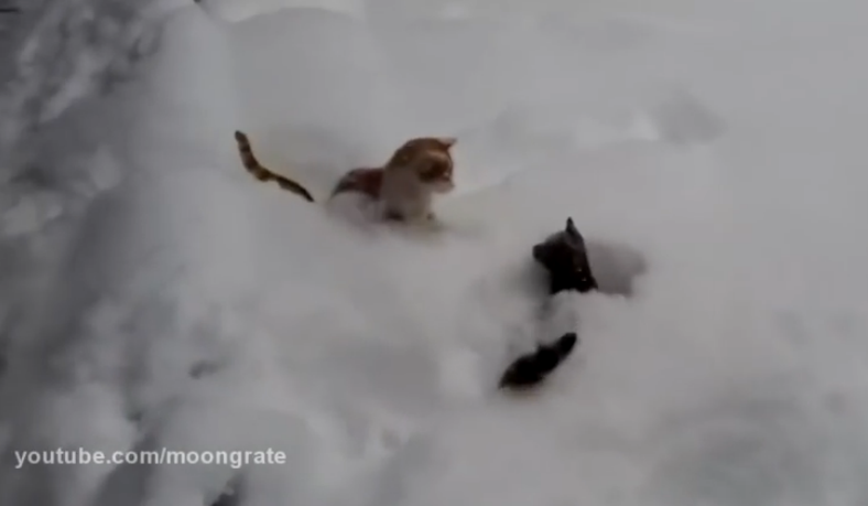 Cute cats having a playful time in the snow, it's pretty amazing.
