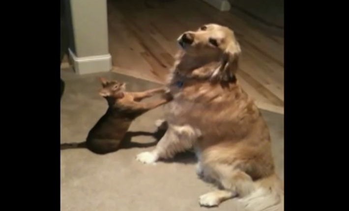 A dog and a cat having a very romantic moment, it's absolutely wonderful