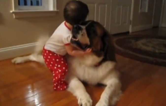 See what this cute Saint Bernard dog did for the little baby girl, adorably cute