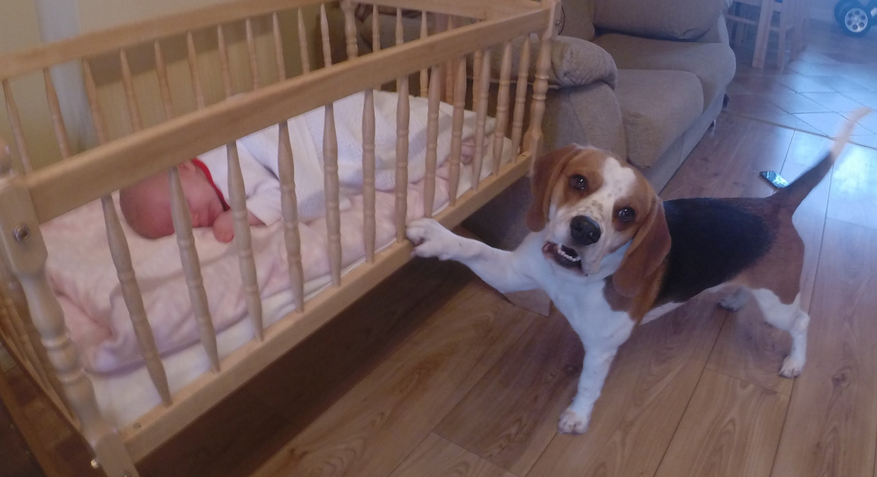 When the baby started to cry, the dog did the cutest thing ever.