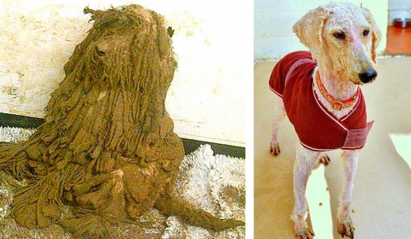 1.23.15-The-Transformation-of-These-Neglected-Dogs-Will-Shock-You7-590x344
