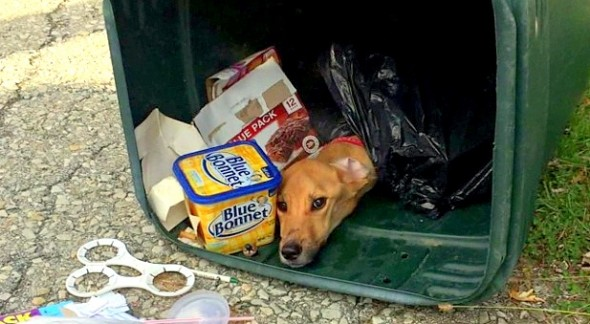 11.5.14-Woman-Who-Left-Dog-in-Trash-Found-Charged-590x324