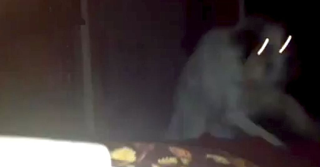 In the middle of the night, the dog wakes his owner up in a very scary way!