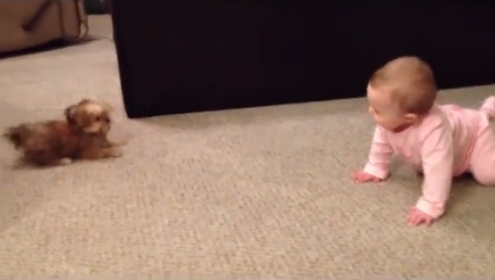 A baby girl and her dog friend having a serious argument, it's adorably funny.