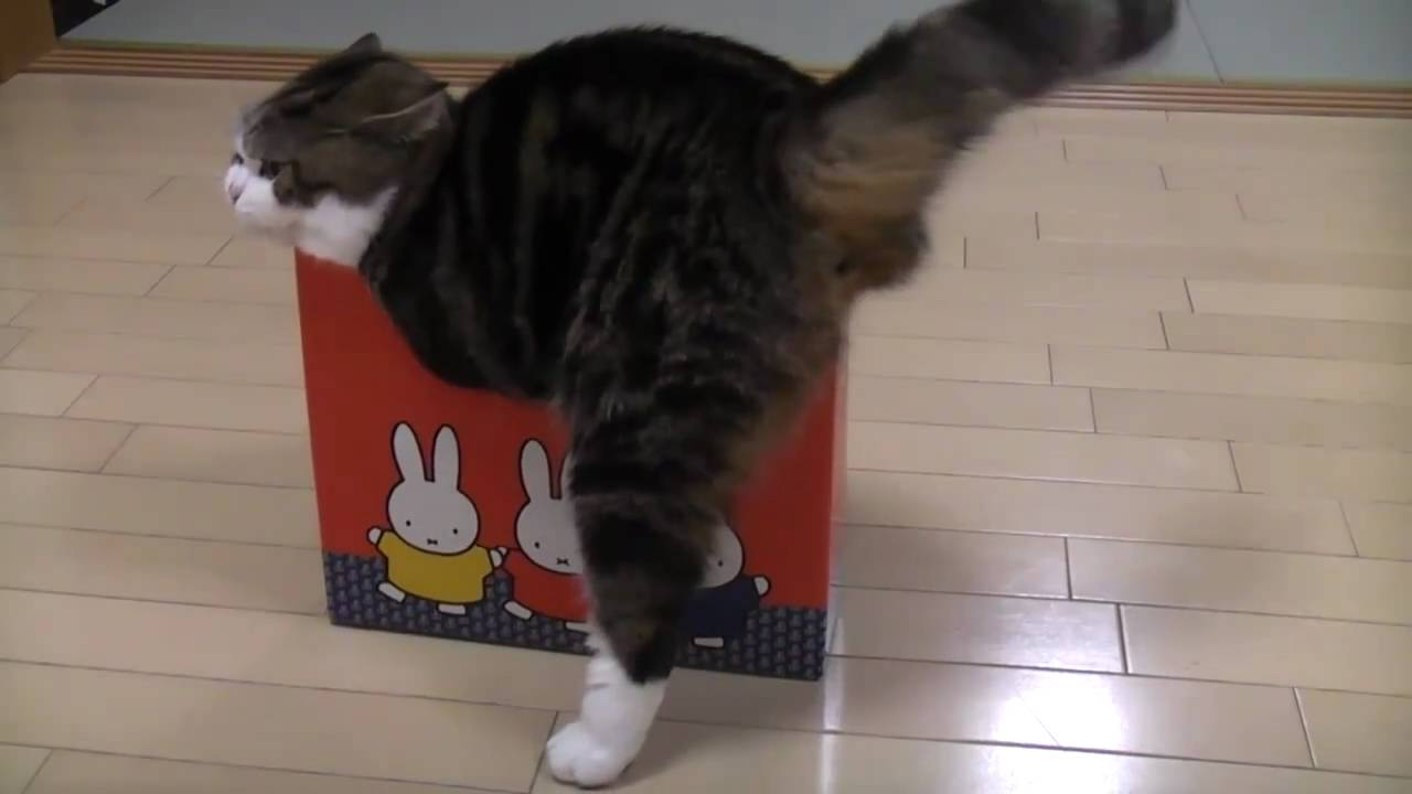 A cat trying to enter small boxes, the way she reacted is very funny!