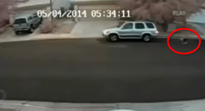 A heartbreaking video shows a man throwing his dog from the car.