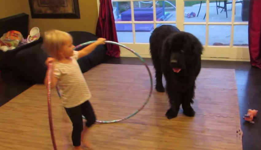 A little girl teaching her dog how to Hula Hoop, adorably funny!