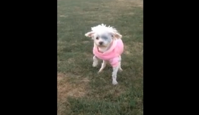 A rescued dog walking on grass for the first time, and it's very touching.
