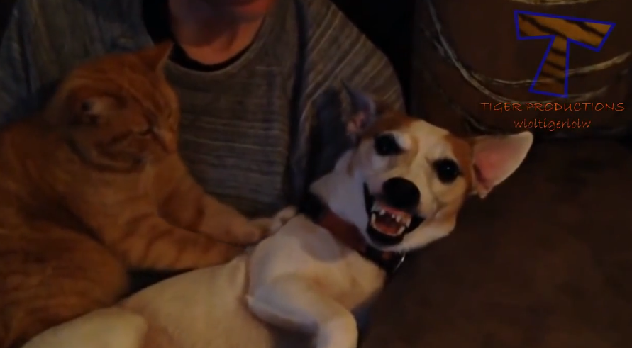 Cats massaging dogs, the dogs' reactions are hilarious.