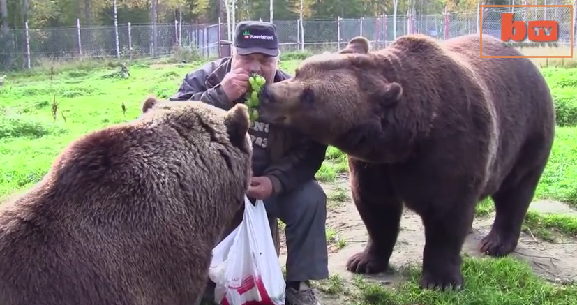 Meet the Bear Man, the man who is living with 6 bears!