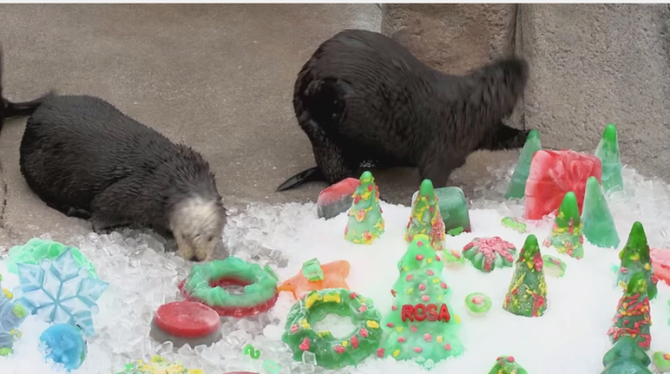 Otters got a special Christmas surprise! You won't stop smiling.