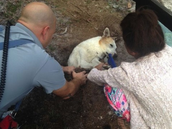 They heard a dog barking from a sinkhole, what happened next was incredible!
