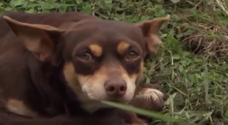What he did will break your heart into pieces after his owner was hit by a car and killed.