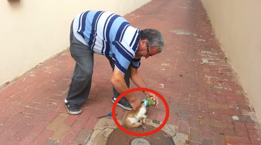 A man helped a cat who was stuck in a can! This man is a hero