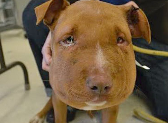 they found that pit bull dog with a rope tied tightly on his neck! It's horribly disgusting