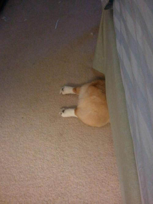 3-I think this dog was too lazy to hide his other half.