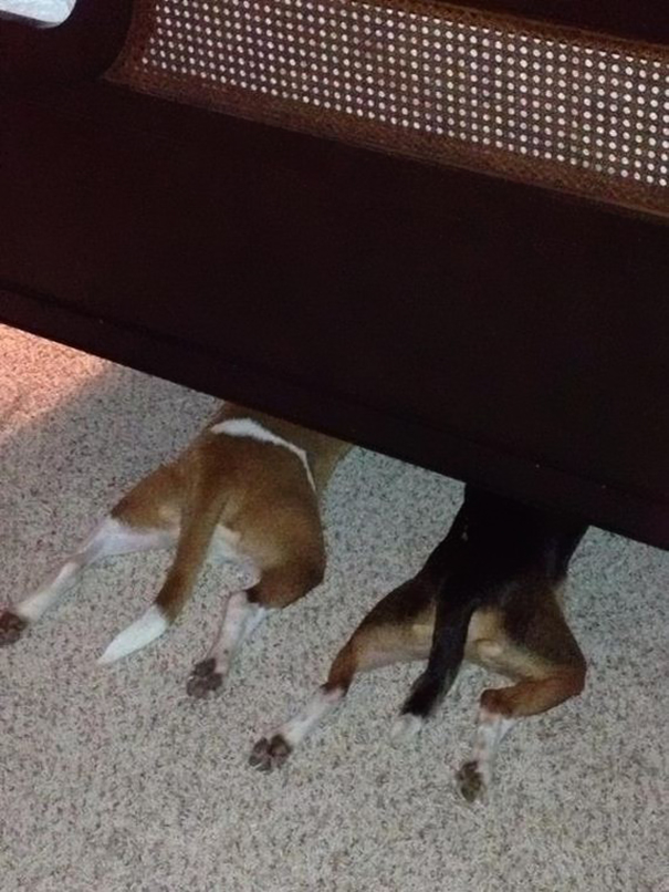 12-Those sneaky dogs are not so sneaky…