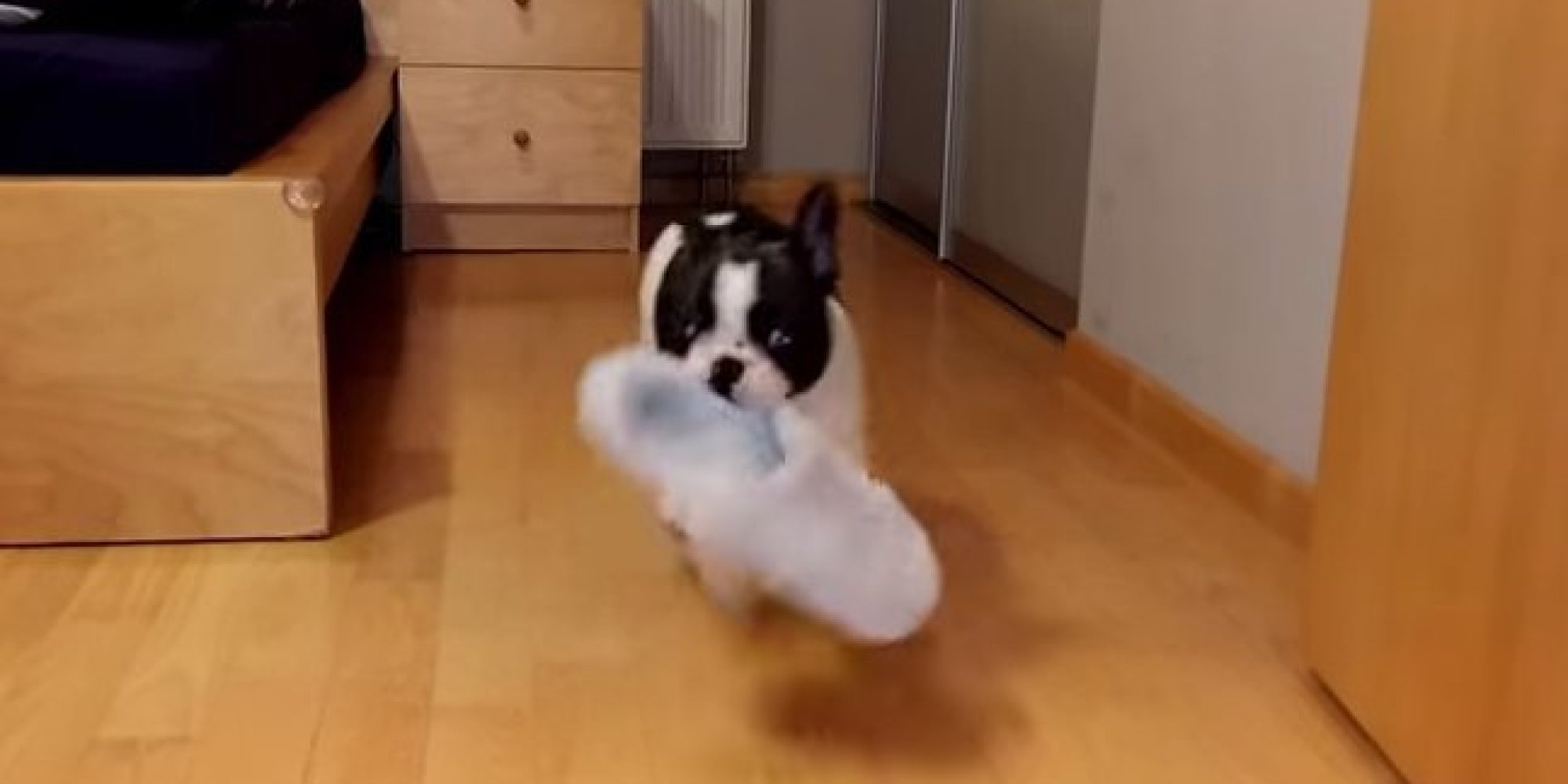 "Meet Pixel the French bulldog, he is the ""slippers"" biggest fan."