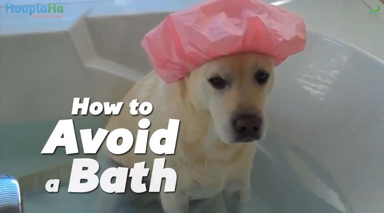 Here is your secret guide to 8 creative ways to avoid a bath