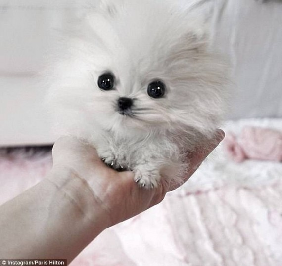 1- This dog is like a furry ball of cuteness.
