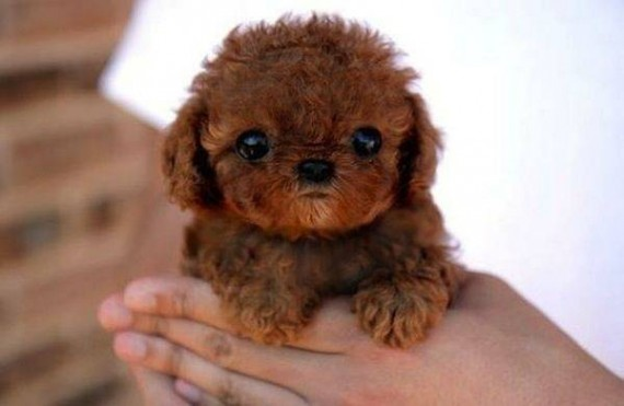 12- Is that a tiny teddy bear? Nope, just a tiny puppy.