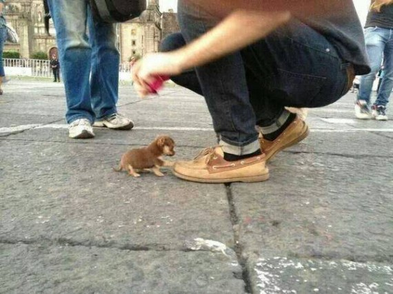 13- 4 tiny puppies in that size could fit in that shoe.