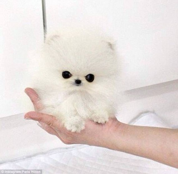 16- Tiniest, fluffiest, and the cutest ever!