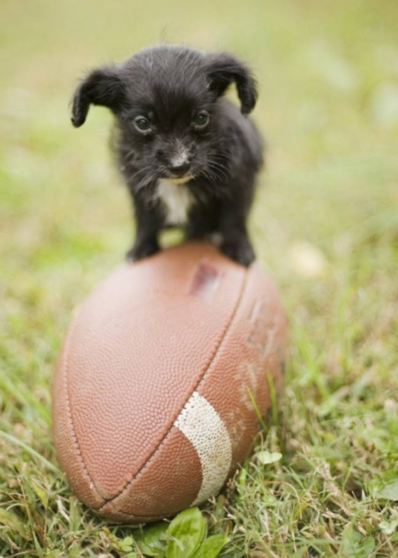 20- Too tiny to can stand on an American football!