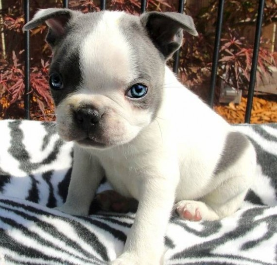 24- Those blue eyes take cuteness to a whole new level.