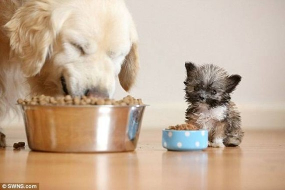 27- Here is a cute bowl to the cutest puppy!