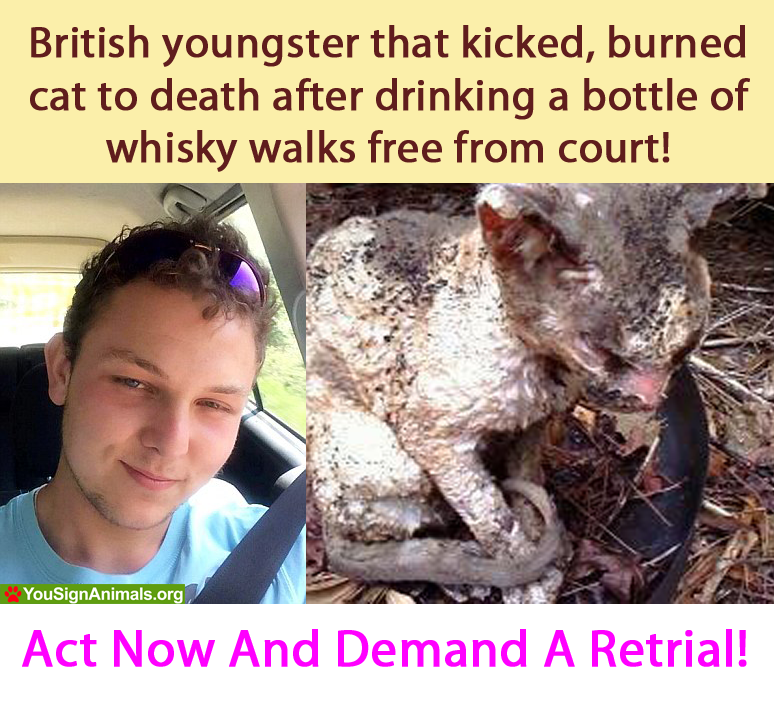 He kicked a cat and threw it into fire ALIVE! And he is still a free