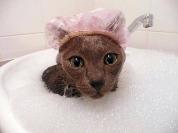 8-This is what I call a kitty bubble bath!