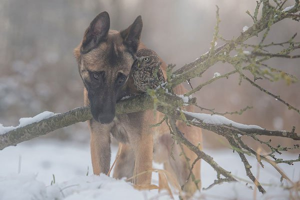 dog-owl-friendship-tanja-brandt-10