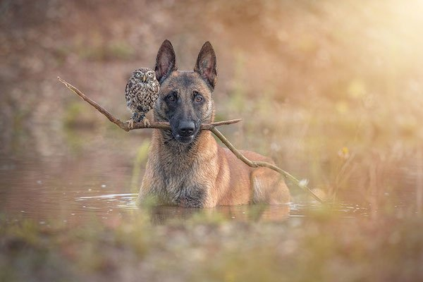 dog-owl-friendship-tanja-brandt-12