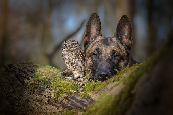 dog-owl-friendship-tanja-brandt-13