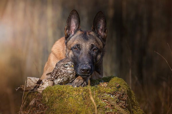 dog-owl-friendship-tanja-brandt-14