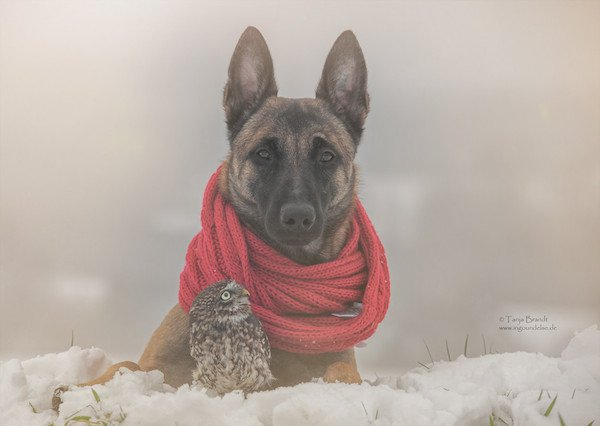 dog-owl-friendship-tanja-brandt-15