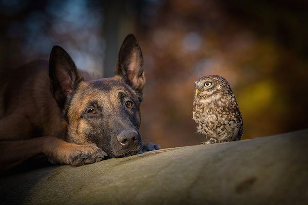 dog-owl-friendship-tanja-brandt-3